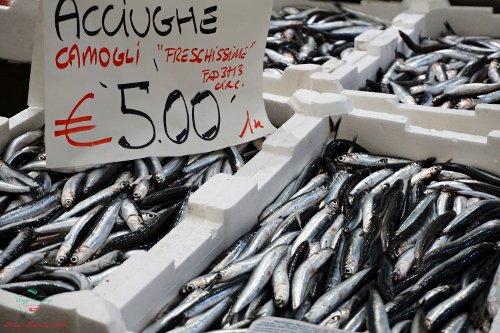 acciughe sul banco al Mercato Orientale di Genova