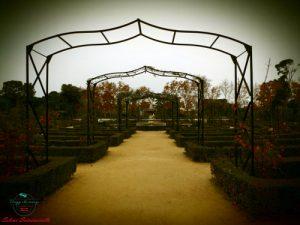 rosaleda parque del retiro madrid