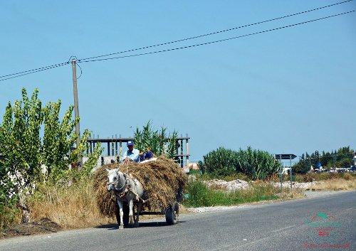 un carretto trainato da un mulo per le strade albanesi, uno dei motivi per cui vale la pena organizzare un viaggio nei balcani è proprio la possibilità di vedere scene come questa.