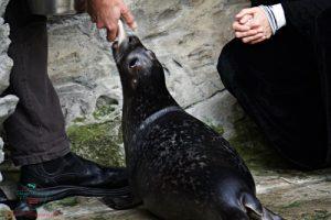 visita all'acquario di genova durante il battesimo di pesto.
