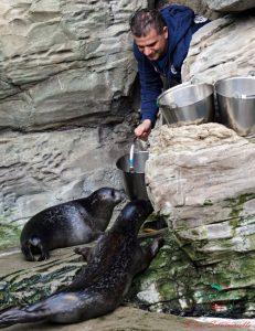 visita all'acquario di genova nel giorno del battesimo del fochino pesto.