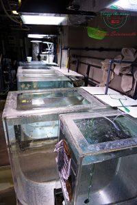 visita all'acquario di genova dietro le quinte meduse