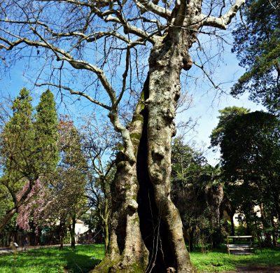 Gli alberi dell'Orto Botanico di Padova.