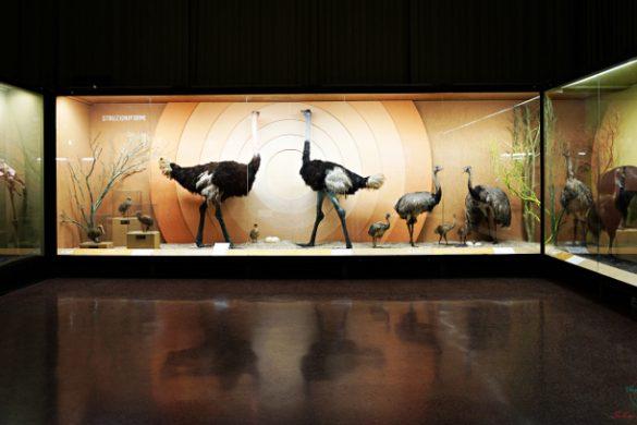 se vuoi sapere cosa visitare a genova, non perderti la collezione del museo di storia naturale giacomo doria.