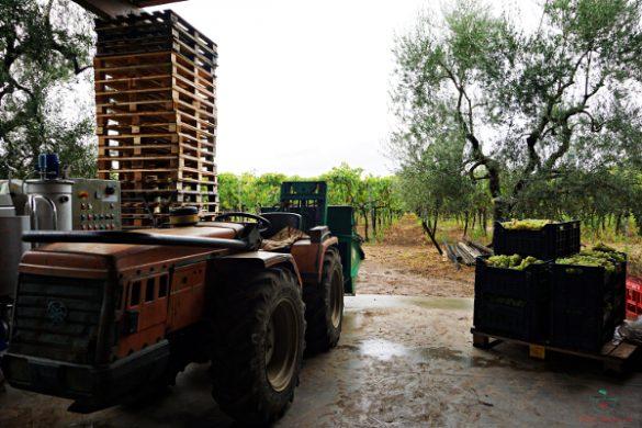 Esterno dell'Azienda Agricola Mazzone a Ruvo di Puglia.