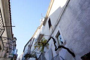 Una vite esce dal muro di una casa di Ischitella.