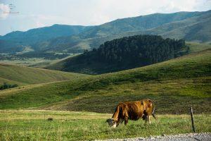 Cosa visitare in Serbia: Altopiano di Zlatibor.