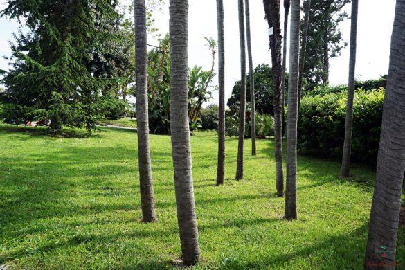 scorci dei parchi di nervi tra gli alberi