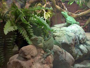 parchi divertimento in emilia - romagna: acquario di cattolica, basilischi