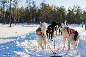 dove andare in vacanza in inverno: rovaniemi  © Simona Pasquino