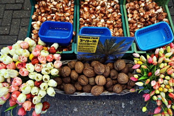 Bulbi al Bloemenmarkt di Amsterdam.