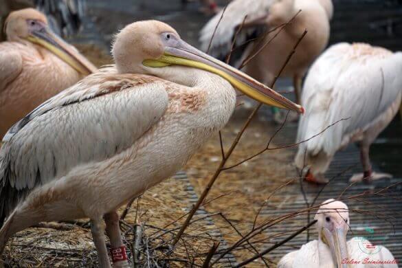 Uccelli allo zoo artis, una delle tappe per visitare amsterdam in 4 giorni al meglio.