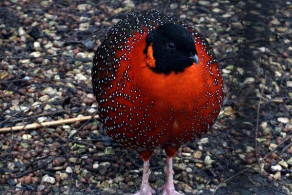 Uccellino rosso allo zoo artis, una delle tappe imperdibili per visitare amsterdam in 4 giorni