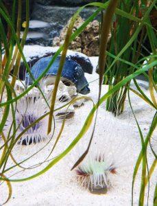 teschio al sea life aquarium di gardaland ad halloween