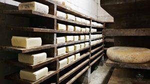 formaggi nella cantina di formazza agricola