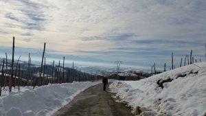 strada innevata nelle langhe in inverno