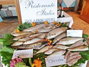 i pesci del lago maggiore